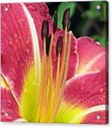 Flower Garden 02 Acrylic Print