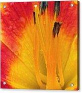 Flower Garden 03 Acrylic Print