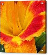 Flower Garden 06 Acrylic Print
