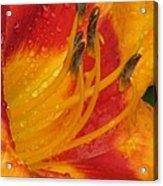 Flower Garden 10 Acrylic Print