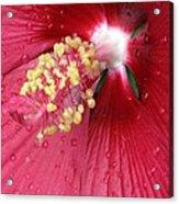 Flower Garden 17 Acrylic Print
