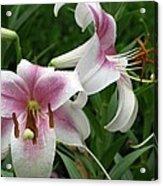 Flower Garden 20 Acrylic Print
