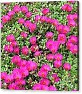 Flower Garden 38 Acrylic Print