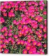 Flower Garden 39 Acrylic Print
