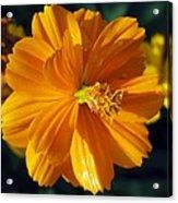 Flower Garden 43 Acrylic Print