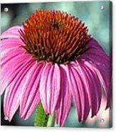 Flower Garden 50 Acrylic Print