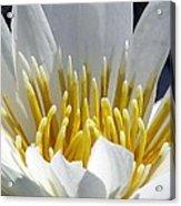 Flower Garden 55 Acrylic Print