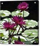 Flower Garden 59 Acrylic Print