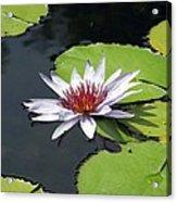 Flower Garden 60 Acrylic Print