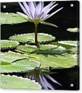 Flower Garden 62 Acrylic Print