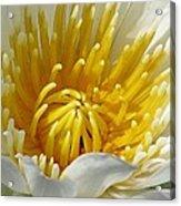 Flower Garden 68 Acrylic Print
