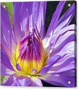 Flower Garden 70 Acrylic Print