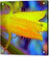 Flower - Garden - Cucumber Acrylic Print