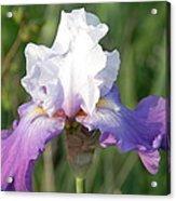 Flower Garden Iris Blooming Acrylic Print