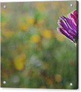 Flower In A Field  Acrylic Print