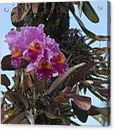 Flower In A Tree Acrylic Print