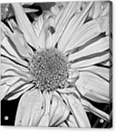 Flower In Black And White Acrylic Print