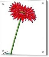 Flower In Bottle Acrylic Print