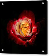 Flower In Red And Gold Acrylic Print
