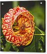 Flower In Red And Yellow  Acrylic Print