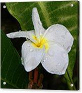Flower In The Rain Acrylic Print