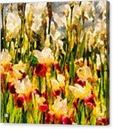 Flower - Iris - Mildred Presby 1923 Acrylic Print by Mike Savad