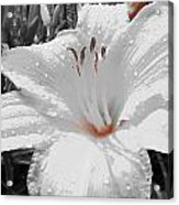 Flower Isolate Acrylic Print