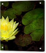 Flower - Lily - Morning Showers Acrylic Print