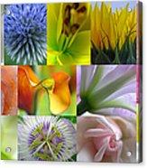 Flower Macro Photography Acrylic Print