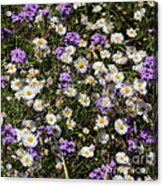 Flower Mix - Purple And White Acrylic Print