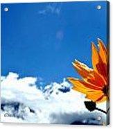 Flower N Hills Acrylic Print