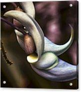 Flower Of A Jade Vine Acrylic Print by Julie Palencia