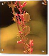 Flower Of Light Acrylic Print