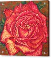 Flower Of Love Acrylic Print