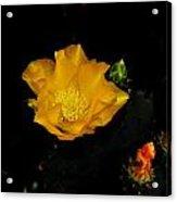 Flower Of The Desert Acrylic Print
