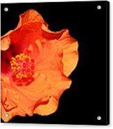 Flower On Fire Acrylic Print