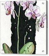 Flower Orchid 02 Elena Yakubovich Acrylic Print by Elena Yakubovich