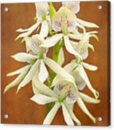 Flower - Orchid - A Gift For You  Acrylic Print