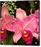 Flower - Orchid -  Cattleya - Magenta Splendor Acrylic Print