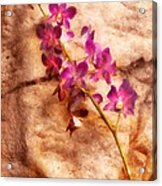 Flower - Orchid - Just Splendid Acrylic Print