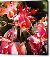 Flower - Orchid - Oncidium Orchid - Eye Candy Acrylic Print