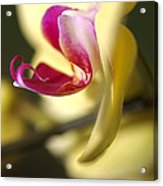 Flower-orchid-yellow Acrylic Print