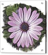 Flower Paint Acrylic Print