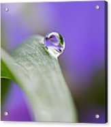 Flower Petal in a Raindrop Acrylic Print