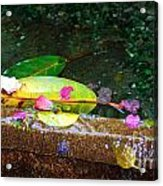 Flower Petals And Leaves Acrylic Print