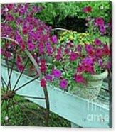 Flower Pot 2 Acrylic Print