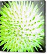 Flower Power 1361 Acrylic Print
