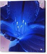 Flower Power 1424 Acrylic Print