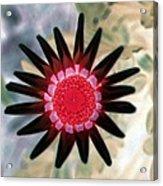 Flower Power 1429 Acrylic Print