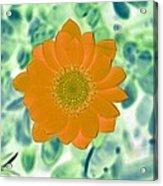 Flower Power 1433 Acrylic Print